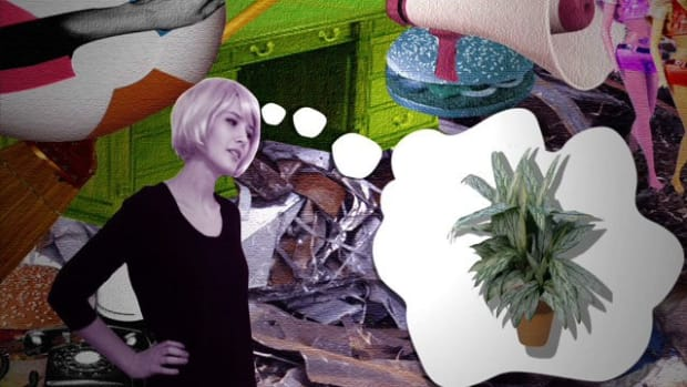 K. How to Choose an Indoor Plant Promo Image