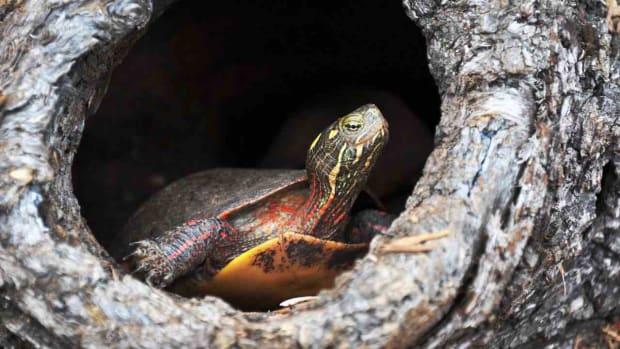 E. How to Understand Turtle Behavior Promo Image