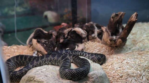 ZA. Snake Supplies You Need Promo Image