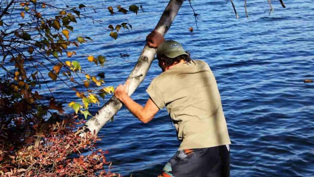 V. How to Attach a Fish Snare Trigger to a Tree Promo Image