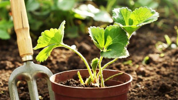 341-Gardening-Tips1