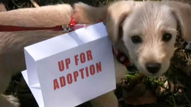 ZB. How to Give Your Dog Up for Adoption Promo Image
