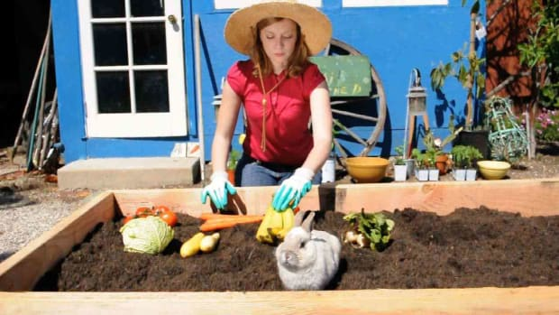 O. How to Plant a Vegetable Garden Promo Image