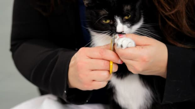 ZG. How to Clip Your Cat's Nails Promo Image