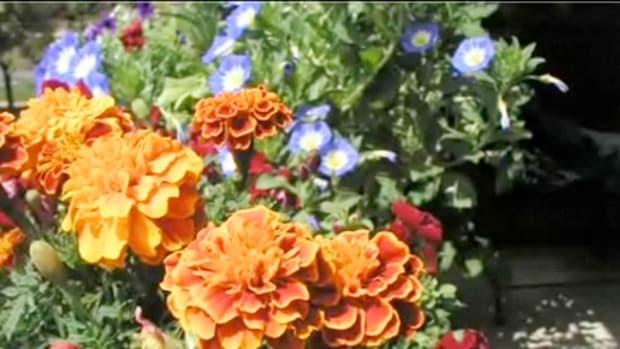 X. How to Choose Plant Fertilizer Promo Image