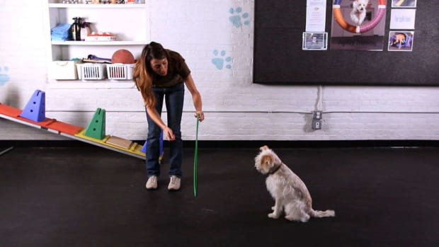 ZB. How to Teach Your Dog to Jump through a Hoop Promo Image