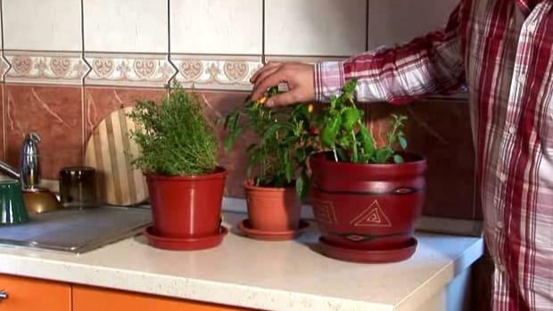 C. How to Grow a One-Pot Indoor Herb Garden Promo Image