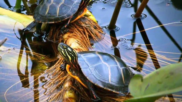 S. Turtle Terrarium Tips Promo Image
