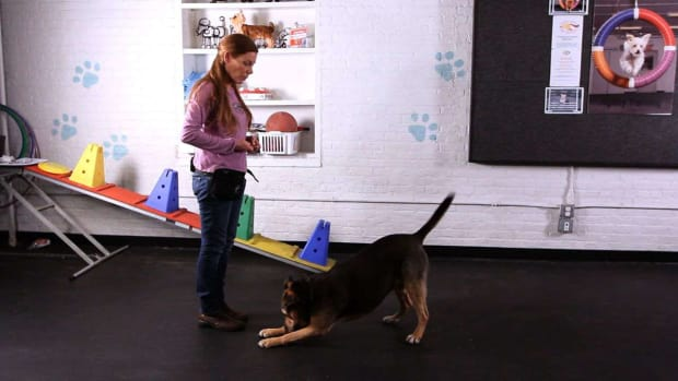 X. How to Teach Your Dog to Take a Bow, Part 2 Promo Image
