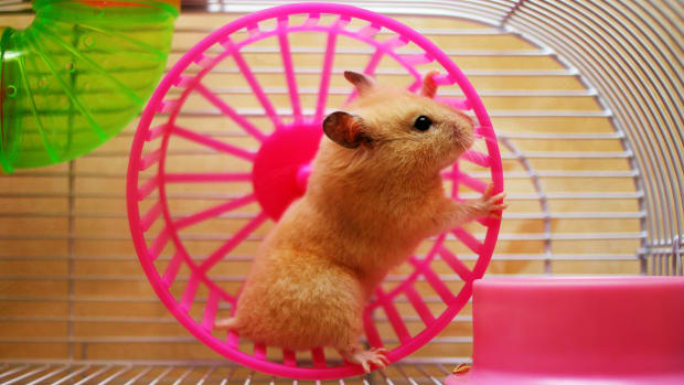 make_maze_for_gerbil_or_hamster1