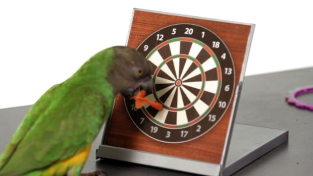 A. How to Set Up a Training Area for Teaching a Parrot Tricks Promo Image