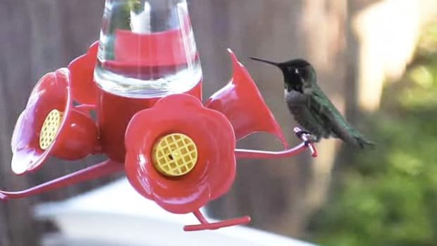 R. How to Attract Hummingbirds to Your Yard Promo Image