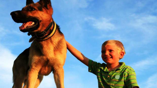 ZZW. What Are Seizure-Alert Dogs? Promo Image