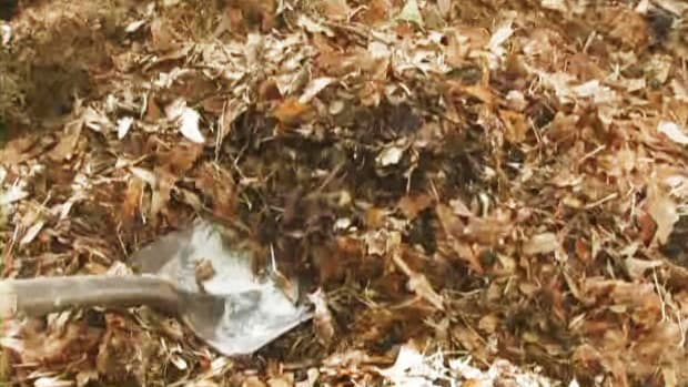 N. How to Compost Autumn Leaves Promo Image