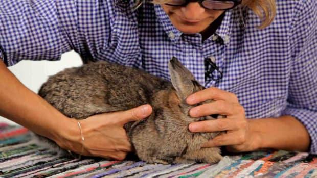 ZM. How to Handle a Pet Rabbit Promo Image