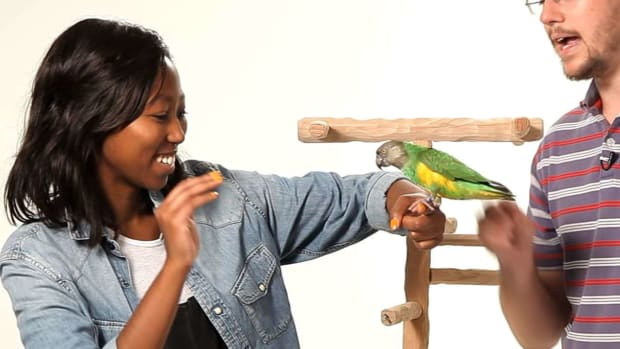 N. How to Get Your Parrot to Be Nice to Strangers Promo Image