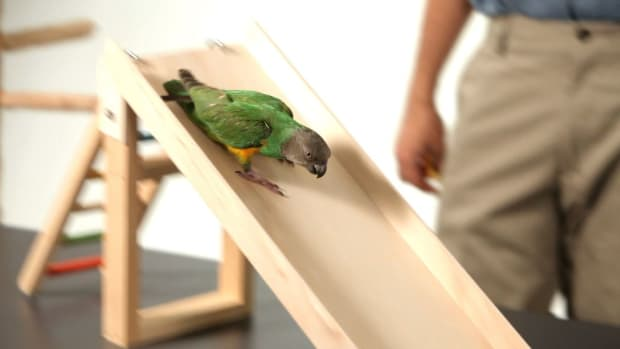 ZB. How to Teach Your Parrot to Go Down a Slide Promo Image