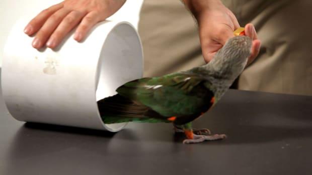 V. How to Teach Your Parrot to Go through a Tube Promo Image