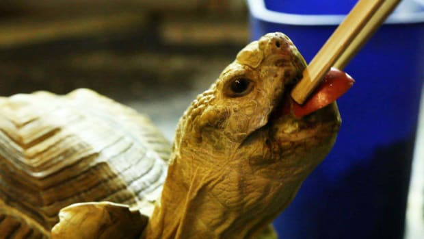 Q. Turtle Feeding Tips Promo Image