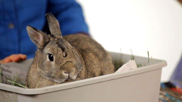 U. Can You Keep a Wild Rabbit as a Pet? Promo Image