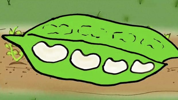 F. How to Grow Lima Beans Promo Image