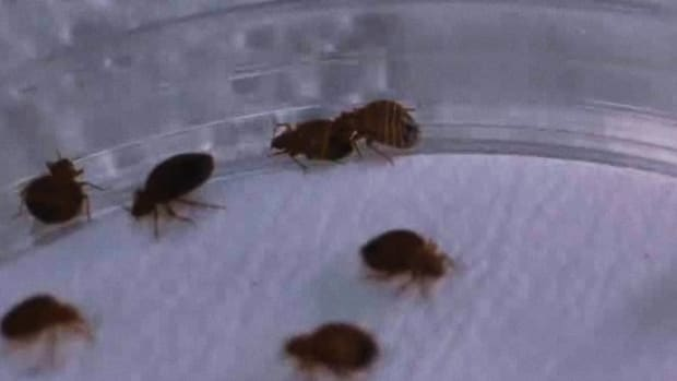 H. How to Inspect Your Home for Bed Bugs Promo Image