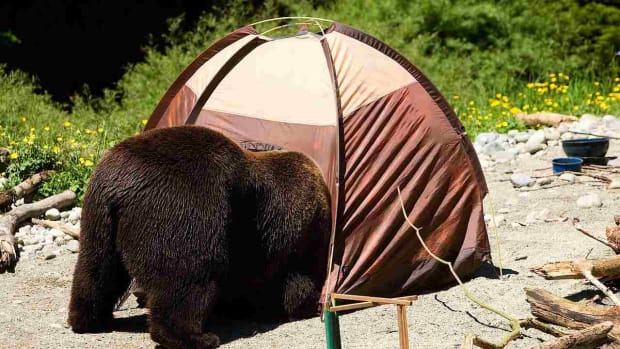 ZL. How to Protect Yourself from Bears While Camping Promo Image