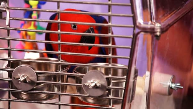 O. How to Pick a Birdcage for a Pet Bird Promo Image