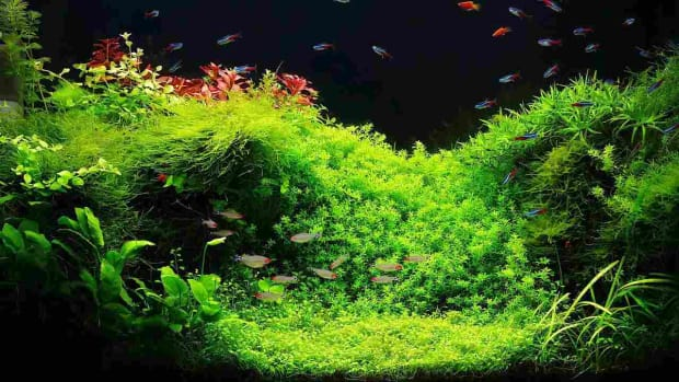 Z. How to Set Up a Fish Tank with Live Aquarium Plants Promo Image