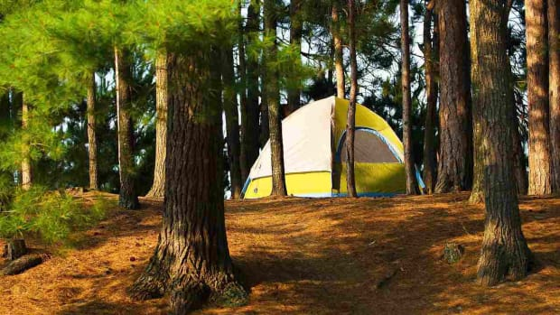 N. How to Pick a Campsite Promo Image
