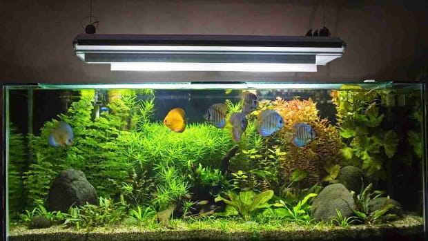ZV. How to Set Up a Fish Tank Maintenance Chart Promo Image