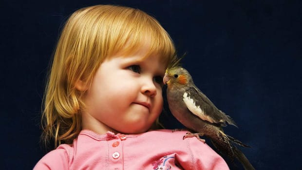 N. How to Bring a Pet Bird into a Home with a Baby Promo Image