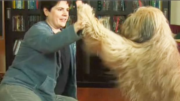 ZE. How to Teach Your Dog to High-Five Promo Image