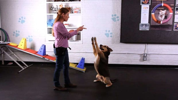 J. How to Teach a Dog the Freeze Trick aka Stick 'em Up Trick Promo Image