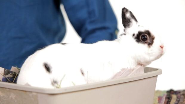 ZI. 8 Common Myths about Rabbits Promo Image