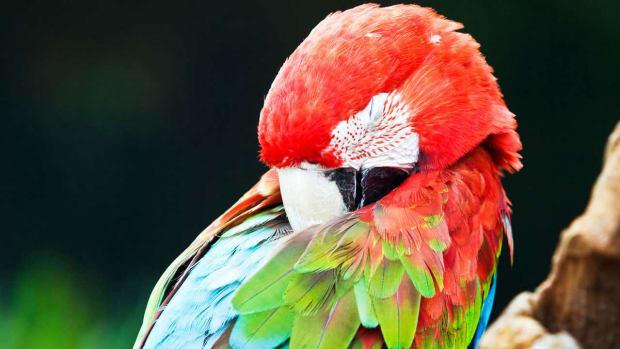 ZI. How Much Do Pet Birds Sleep? Promo Image