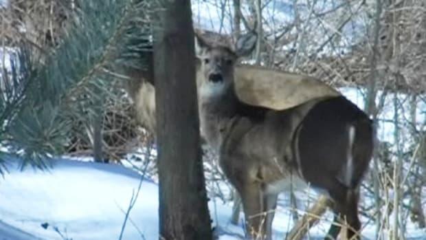 C. How to Make Natural Deer Repellent Promo Image
