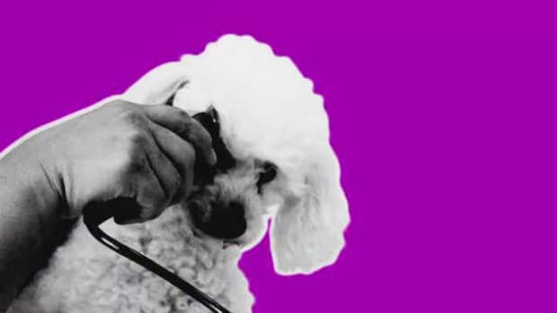 D. How to Give Your Dog a Haircut with Clippers Promo Image