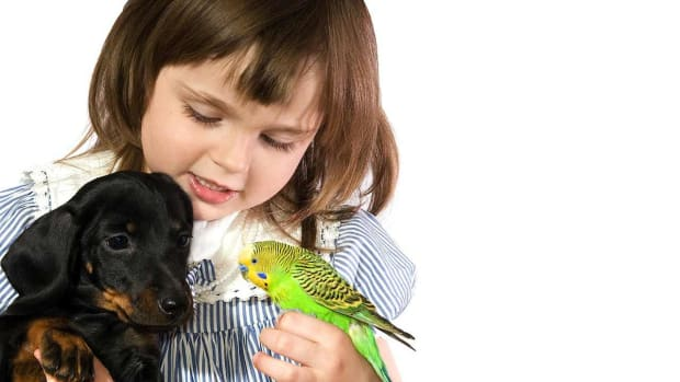 M. How to Bring a Bird into a Home with Other Pets Promo Image