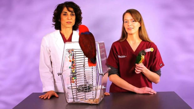 ZX. How to Care for a Bird with Dr. Laurie Hess & Sarah Inglis Promo Image