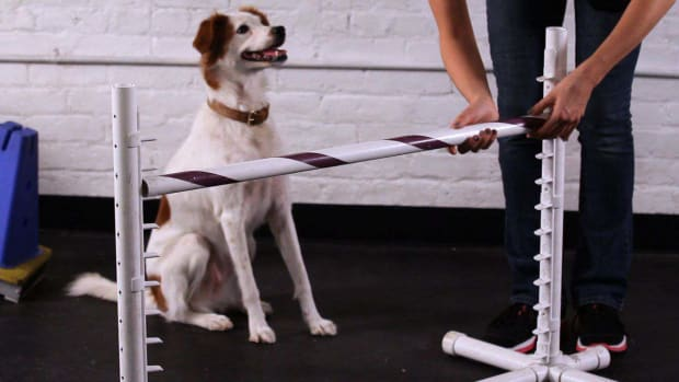 O. How to Teach Your Dog to Jump over a Bar Promo Image