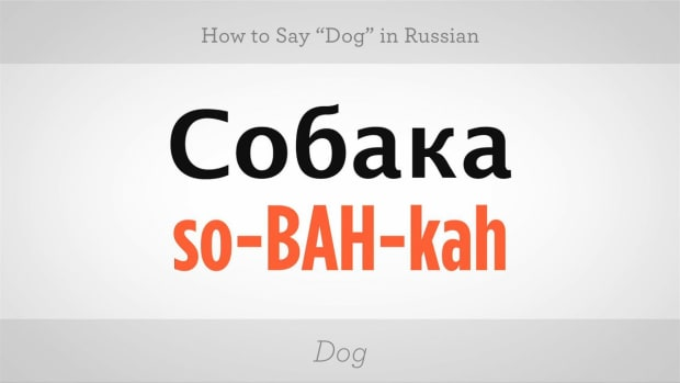 "ZZD. How to Say ""Dog"" in Russian Promo Image"