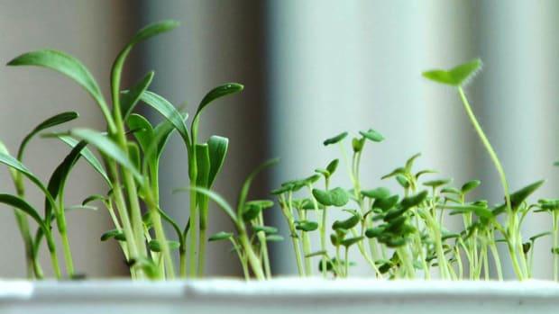 E. How to Grow an Herb Garden Indoors Promo Image