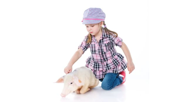 D. Is It Legal to Keep a Pig in Your Home? Promo Image