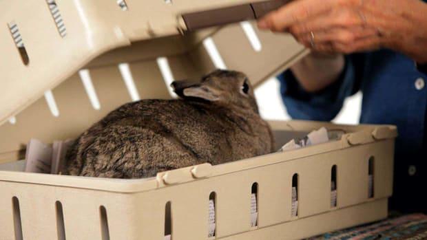 ZE. Best Carrier for a Pet Rabbit Promo Image