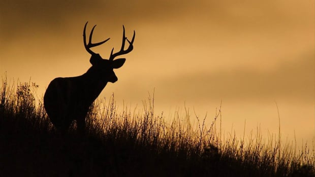 G. How to Pick the Best Rifle for Deer Hunting Promo Image