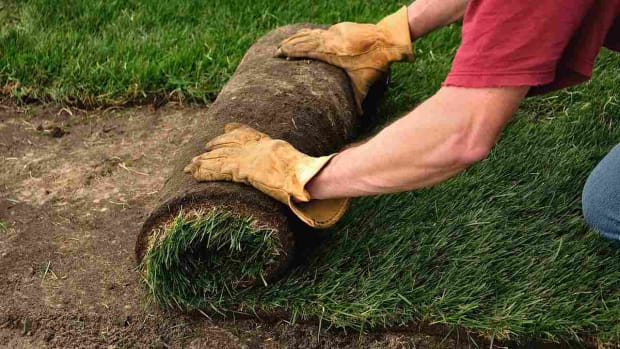 ZB. How to Plant a Lawn from Sod Promo Image