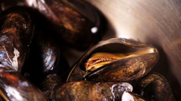 V. How to Steam Mussels Promo Image