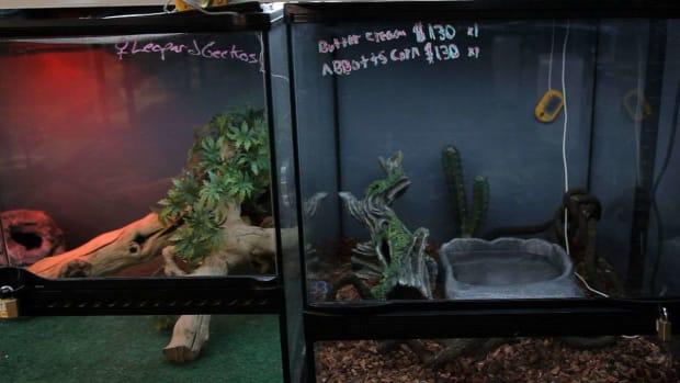 V. How to Set Up a Snake Aquarium Promo Image