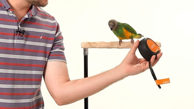 M. How to Make Your Parrot Less Fearful Promo Image
